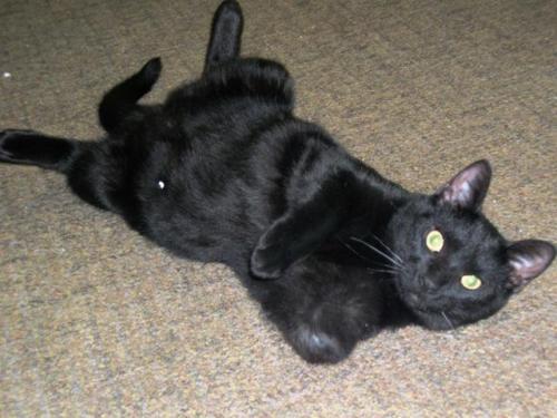 Litter Box For Cat Missing Leg