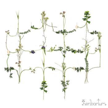 "Blommor Inomhus - ""Herbarium"""